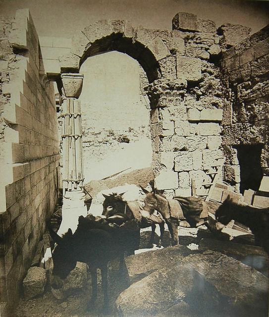 Фотография сделанная в марте 1883 года. Ослики, использованные для вывоза мусора с русских раскопок © Иерусалимское отделение ИППО
