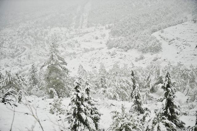 """""""Белая долина"""" в окрестностях южного Иерусалима покрыта белым снегом. ©  Православный паломнический центр «Россия в красках» в Иерусалиме"""