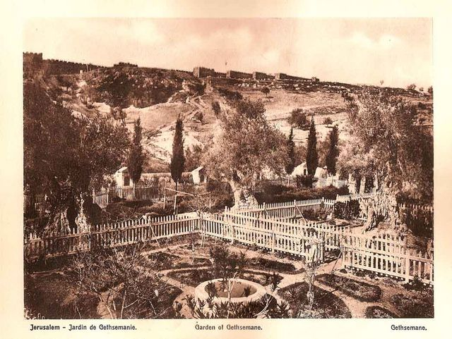 Garden of Gethemane. Tour Guide in Israel, Jerusalem and the Holy Land Pavel Platonov